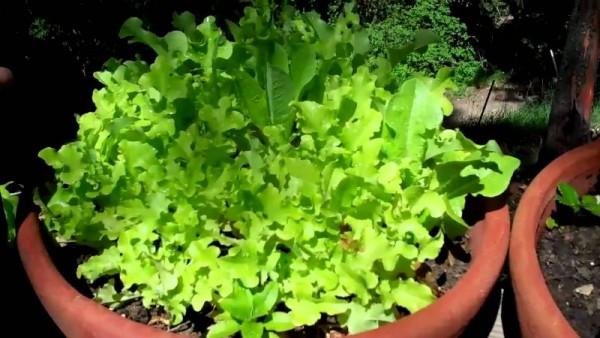 Donice ogrodowe na warzywniak